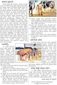 animal hostel adivaram 2